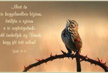 Zsoltárok