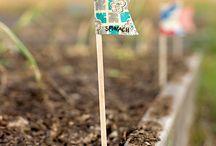 Garden stuff / by Jenny Nettesheim
