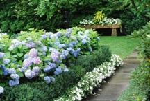 Garden Inspiration  / by Bree Charlier