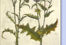 rośliny, zioła