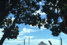 New Zealand Scenery / Collected New Zealand beautiful scenery.