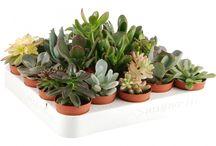 Plantes & Terrarium