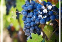 Wine Regions Around the World