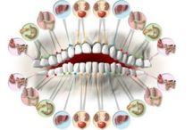 spojení zubů s orgány těla