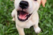 Doggie Love  / by Marci Hensley
