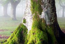 Tree's, Trunks and Bark