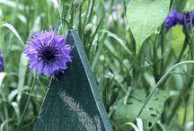Lynn's Garden Ideas / by Lynn Johnson