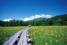 Oze, dans la nature japonaise / Bienvenue à Oze, au milieu de la nature japonaise et à proximité de Tokyo.