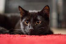 Black cats / Black cat photography