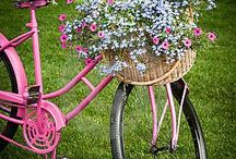 Nature - flower and bike