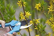 Sträucher und Rosen schneiden