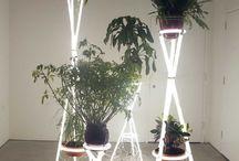 Plants with Alex