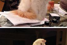 imadom a macskakat