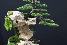 Bonsai and Rocks