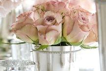 Roses / by Deborah Palladino