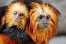 Monkey Stuff!