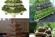 Garden - Veggie