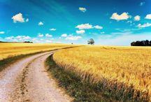 Dieren, Landschapen /  inspiratie van landschap, dieren van zijaanzicht