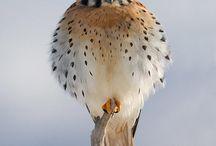 birds / different birds