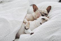 Snuggles