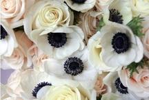 Fleurs - Anemone