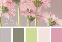 Color: Color Pallet / by Teri G.