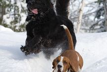 Newfies