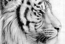 Alexy tigre