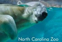 Day Trip! / Fun and interesting places to visit in North & South Carolina. / by Kim Vazquez