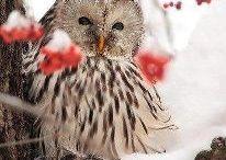 Owls / by Nicole Yakubovsky
