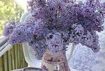 COLOR / Purples