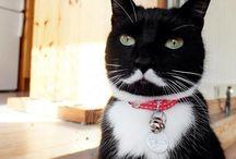 pisi mustaciosu