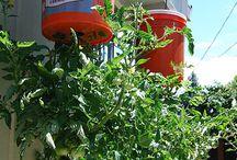 Kert-növények