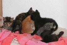 Pugs & Cats / by A*l*e*k*s