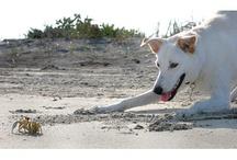 Coastal Pets