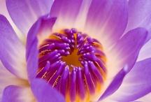 MY FAVORITE FLOWER / by Darlene Scelsa