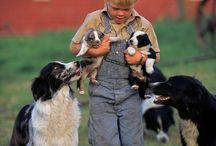 kutyák állatok  és emberek