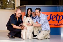Jetpets - The Pet Travel Experts / Jetpets are Australia's leading pet travel experts and worldwide service provider for transporting pets around the corner or around the world.