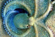 Octopus - IP -
