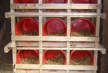 Chicken Nest Boxes / by Home Farm Ideas