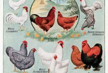 garden & chickens / by Mary Stephens