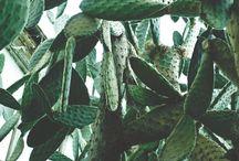 Botanic mix