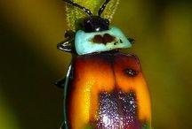 Beetles..