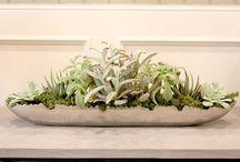 Centerpieces & House Plants