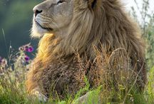 Animal Kingdom~~Wild Kittys / by Sherrilynne Karolus