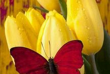 Rub✅Flowers & Butterflies / Welcome! Feel free to invite all your friends. Do NOT post inappropriate content (spam, nudity, sexual, abuse) or you will be removed.  Do your best not to duplicate. Enjoy!