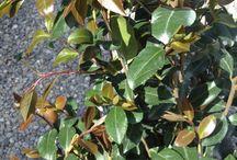 Piante ornamentali / Piante ornamentali e fiori da esterno