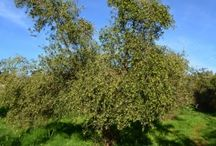 The story of the Olive Harvest / From the tree to the bottle!