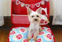 Dog beds, treats, etc.