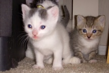 Cute Animals Pic's